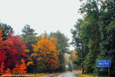 Fall Colors, Portland, Maine