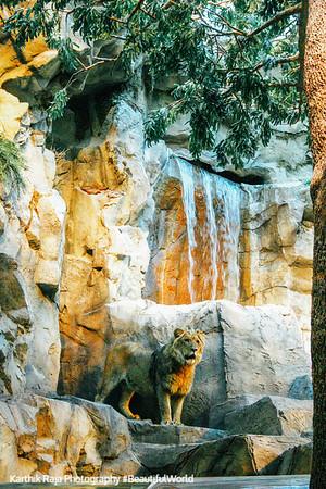 The MGM lion, Las Vegas, NV