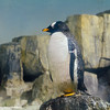Penguin, Central Park Zoo, New York