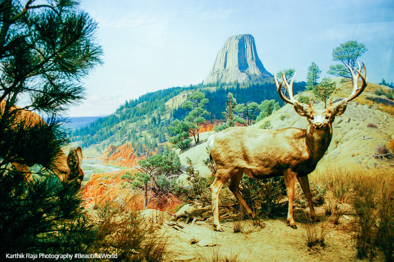 Rocky Mountain, American Museum of Natural History, New York City
