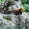 Grizzly Bear, Central Park Zoo, New York