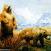 Bears of North America, American Museum of Natural History, New York City