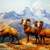 Mountain ram, American Museum of Natural History, New York City