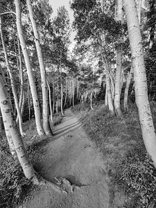 Aspens, Bloods Lake Trail, Park City, Utah