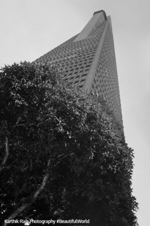 Transamerica Pyramid, Building, San Francisco, California