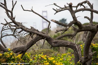 Presidio Park, Battery to Bluffs Trail, San Francisco, California