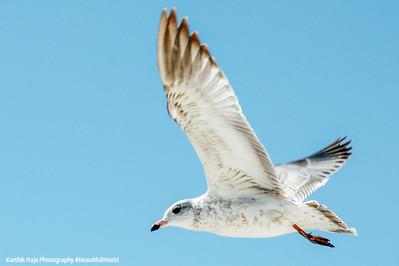 Sea gulls, Milwaukee, Wisconsin