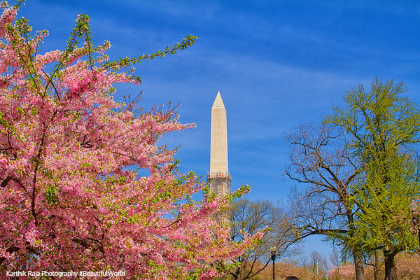 Washington Monument, Cherry Blossoms, Tidal Basin, Washington D.C.