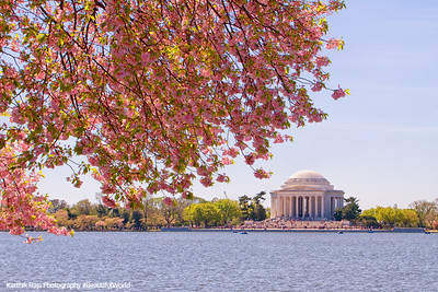 Jefferson Memorial, Cherry Blossoms, Tidal Basin, Washington D.C.