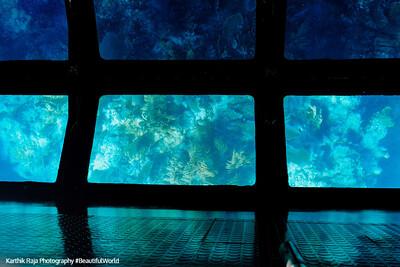 Coral Reef, Biscayne National Park, Florida