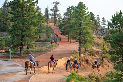 Horses, Bryce Canyon National Park, Utah