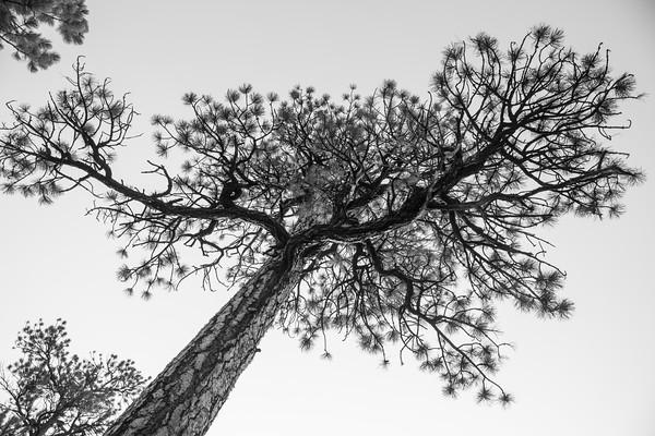 Beauty of trees, Bryce Canyon National Park, Utah