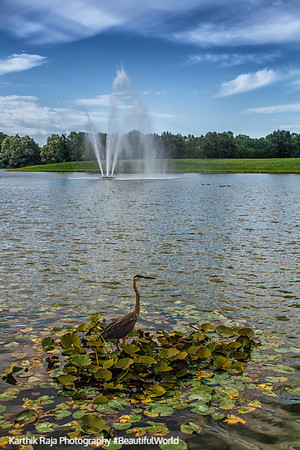 Water fountain, Heron, Chicago Botanic Garden