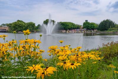 Flowers, Chicago Botanic Gardens
