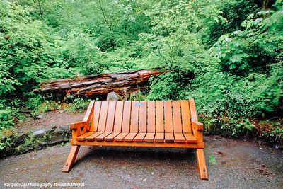 Bench or Tree? Columbia River Gorge National Scenic Area, Oregon