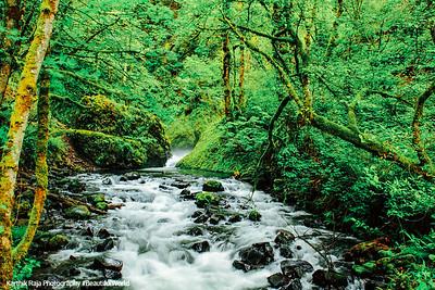 Bridal Veil Falls Creek, Columbia River Gorge National Scenic Area, Oregon