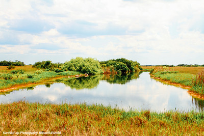 Everglades National Park, Shark Valley, Florida
