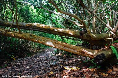 Hugh Taylor Birch State Park, Ft. Lauderdale, Florida