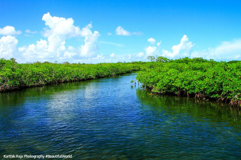 Mangroves, John Pennekamp Coral Reef State Park, Florida Keys