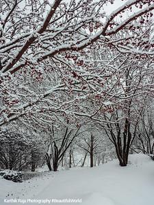 Winter, Snow, Palatine, Illinois