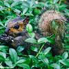 Squirrel, Deer Grove Forest Preserve, Palatine
