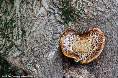 Mushroom, Living in a Forest Preserve, Cook County