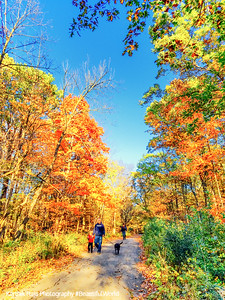 Fall Colors, Forest Preserve of Cook County, Chicago