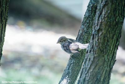 Bird, Deer Grove Forest Preserve