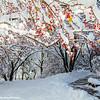 Deer Grove Forest Preserve, Winter wonderland, November 2015, Chicago