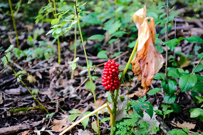 Crabtree Nature Reserve, Palatine IL