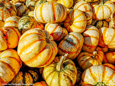 Pumpkins, Goebberts Pumpkin Farm, Hoffman Estates, IL