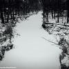 Cherry Brook, Winter, Palatine, Il