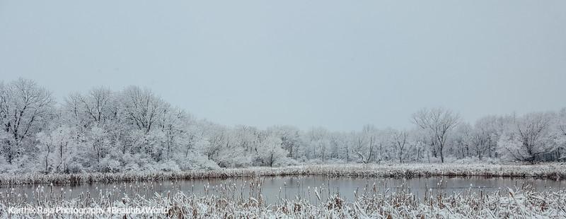 Image result for Deer Grove Forest Preserve