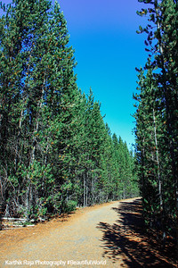 Grand Teton National Park, Wyoming - hike in the woods