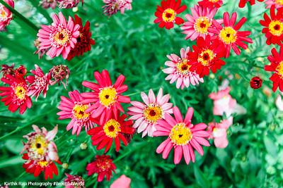 Grand Teton National Park, Wyoming - flowers at Jackson Lodge