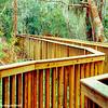 Sea Pines Forest Preserve, Hilton Head Island, South Carolina