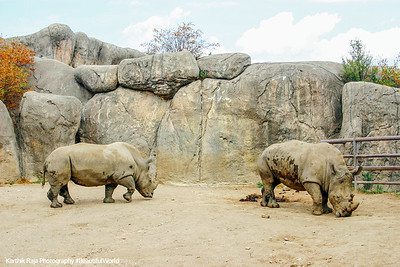 White River State Park, Indiana, Indianapolis Zoo, Rhinoceros