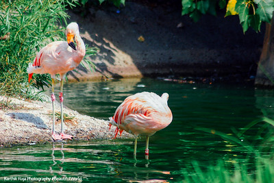 White River State Park, Indiana, Indianapolis Zoo, Pink Flamingo