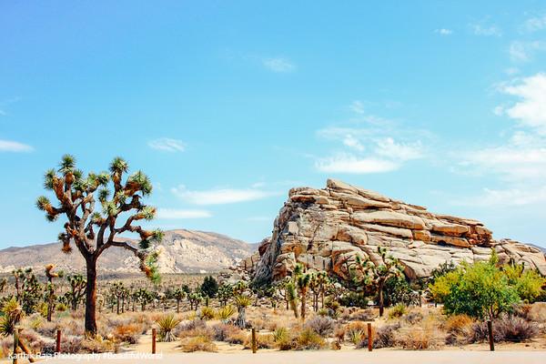 Rocky desert, Joshua Tree National Park, California