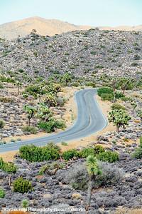 Road through Joshua Tree National Park, California