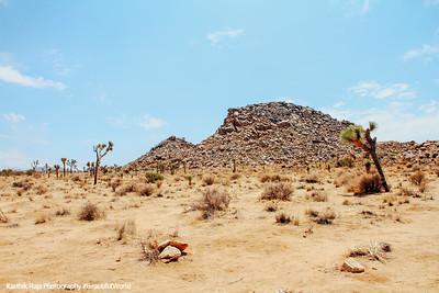 Desert Landscape, Joshua Tree National Park, California