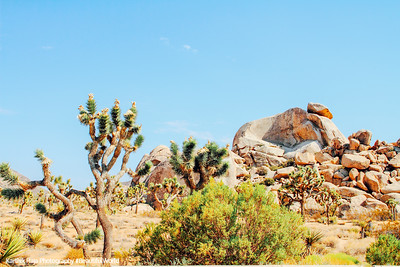 Giant Rock Chair, Joshua Tree National Park, California