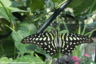 Butterfly Conservatory, Mackinac Island, Michigan