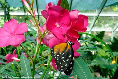 Butterfly Conservatory, Mackinac Island, Michigan