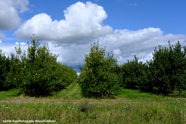Apple Rd, Orchards, Michigan