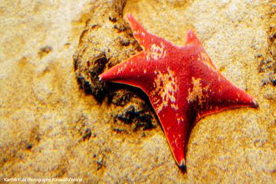 Starfish, Monterey Bay Aquarium, California
