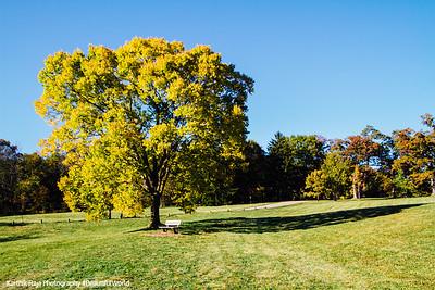Bench, Morton Arboretum, Fall, Chicago, 2015