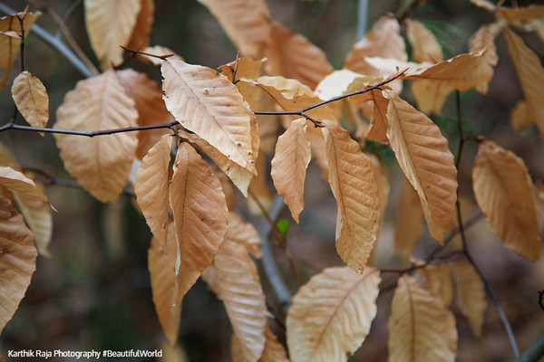 Leaves, Washington Crossing State Park, New Jersey