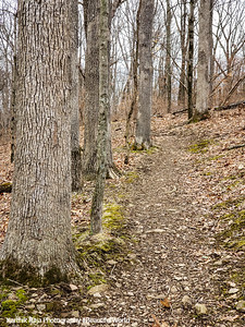 Trail, Washington Crossing State Park, New Jersey