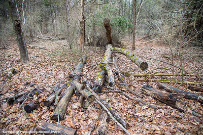 Fallen Tree, Washington Crossing State Park, New Jersey